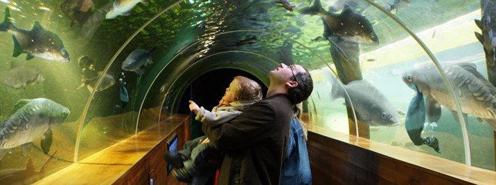 Lakes tunnel aquarium